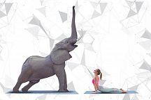 Mастер-класс по йоге со слонами