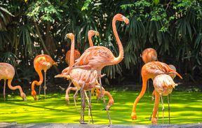 Сафари-парк Safari World